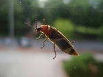 bug on a window