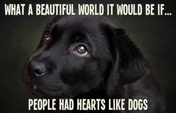 hearts like dogs
